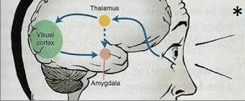 admiga agopuntura torino