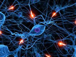 cervello1 agopuntura torino