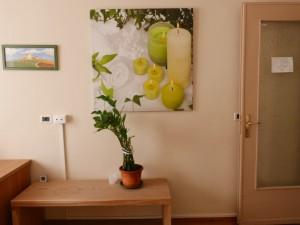 pianta in studio agopuntura torino